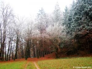 Wonders of Nature: Frozen Fog